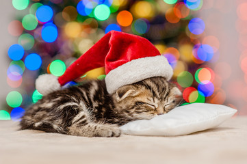 Tabby kitten in red santa hat sleep on pillow with Christmas tree on background