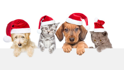 Group of cats and dogs with red christmas hats above white banner looking at camera. isolated on white background