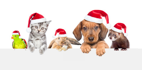 Group of pets  in red christmas hats over empty white banner. isolated on white background. Empty space for text