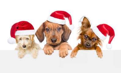 Group of dogs  in red christmas hats above white banner. isolated on white background