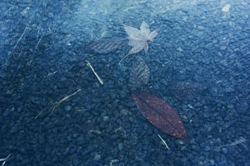 冬の朝凍る落ち葉