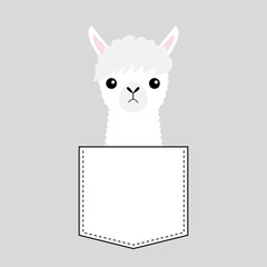 Alpaca llama face head in the pocket. Cute cartoon animals. Kawaii character. Dash line. White and black color. T-shirt design. Baby gray background. Isolated. Flat design.