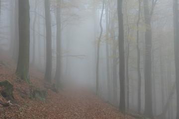 Foto op Canvas Bos in mist Nebel im Wald
