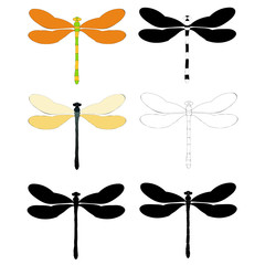 dragonfly, set of silhouettes and sketches, collection