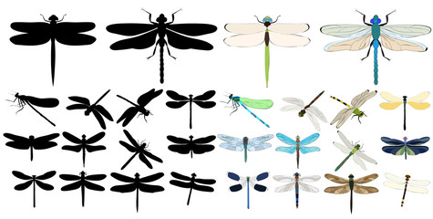 vector isolated, set of dragonflies, insects, on white background