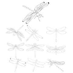 dragonfly sketch set, insects