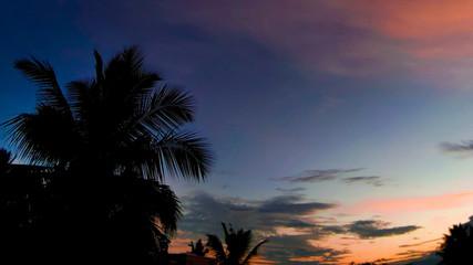 palm sunset background