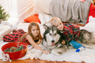 Little cute baby with blond hair his older sister having fun at home with a dog Malamute at home in a decorated room for Christmas