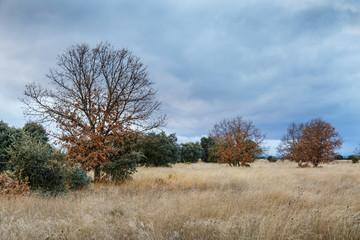 Paisaje natural en otoño con pradera, robles melojos y encinas. Quercus pyrenaica. Quercus ilex.