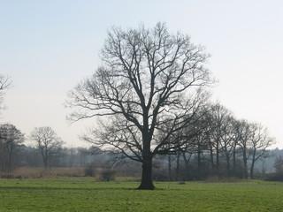 Winterlandschaft an der Elbe