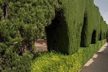 Beautiful lush green garden inside Alhambra Palace in Granada, Spain. The lush greenery looks amazing and is beautiful during the day. Alhambra Palace is the most famous palace in Spain.