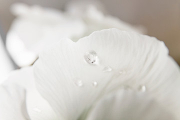 White water drop on bright petal