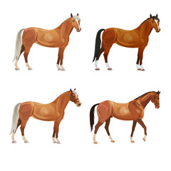 Horses in various poses