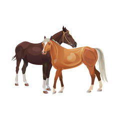Two horses standing together