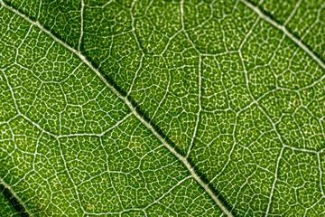 green macro image of leaves transparency