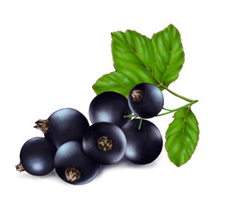 Hand drawn watercolor illustration of the food: ripe tasty black currant branch, isolated on the white background