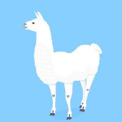 Funny llama vector illustration for poster, nursery, t-shirt design. Cute cartoon alpaca. Invitation, birthday card.