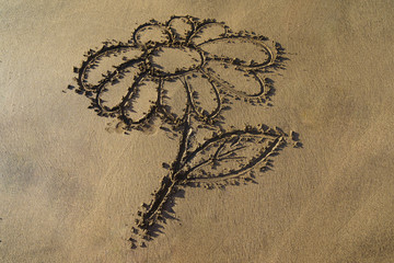 The picture of the flower (chamomile) on the oceanic sand