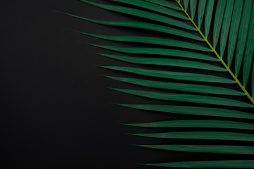 Tropical palm leaves on black color