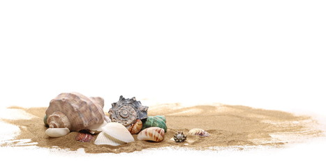 Sea shell in sand pile isolated on white background