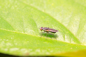 muscidae insects on plant