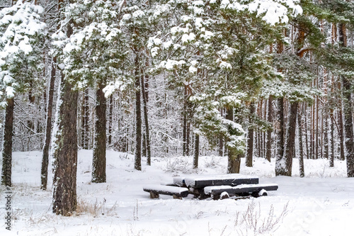 Awe Inspiring Beautiful Coniferous Forest Many Pines Covered With Snow Download Free Architecture Designs Scobabritishbridgeorg