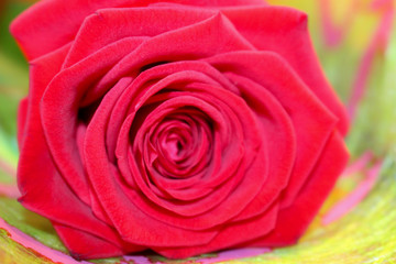Rose bouquet with one flower.