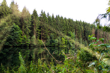 Fir trees in a forest next to a lake in Germany