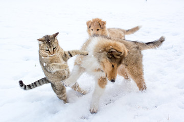 Tabby cat and rough collie puppy fighting in the snow