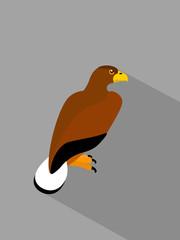 Eagle on grey background