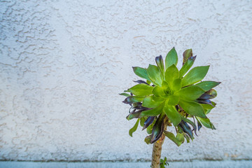 succulent flower on the wall