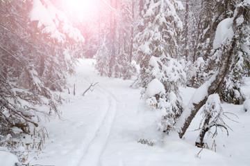 Winter landscape on a frosty day