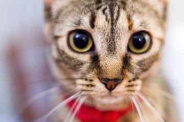 Ritratti di gatto