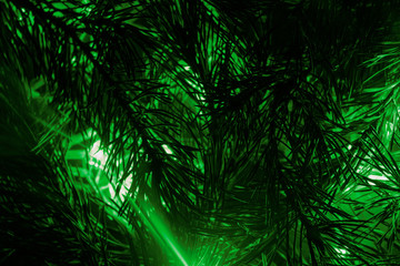 background of fir branches and green lights