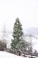 Beautiful view of tall fir tree near wooden fence on snowy hill. Winter landscape