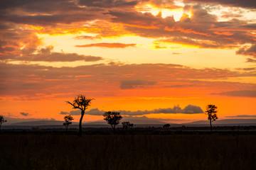 Wall Mural - African Golden Orange Sunset Scene