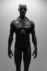 statue of a man, muscles anatomy