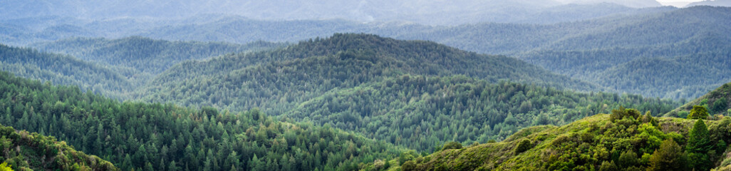 Panoramic view of the hills and canyons covered in evergreen trees on a foggy day, Santa Cruz mountains, San Francisco bay area, California