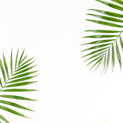 Tropical green palm leaves on white background. flat lay, top view