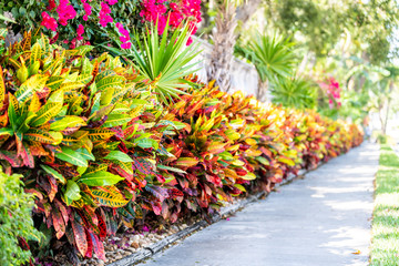 Door stickers Yellow Vibrant codiaeum variegatum, petra croton, variegated plant leaf, leaves, landscaped garden, landscaping wall, outside, outdoor street, green grass, road, street sidewalk in tropical Florida keys