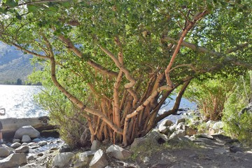 Tree on Lake