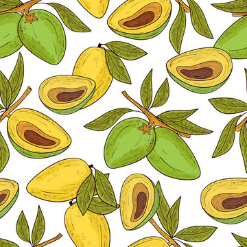Lucuma. Fruit, leaves. Seamless, background, wallpaper, texture. Sketch. Color