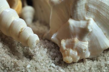 snail shells lying on sand
