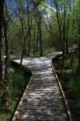 Timber built forest walkway, Mabie Forest, Dumfries Scotland.