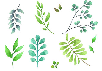 Watercolor illustration.  Botanical design elements.  Set of branches, green leaves and herbs. Postcards, wedding invitations, blogs, posters. Isolated on white background.