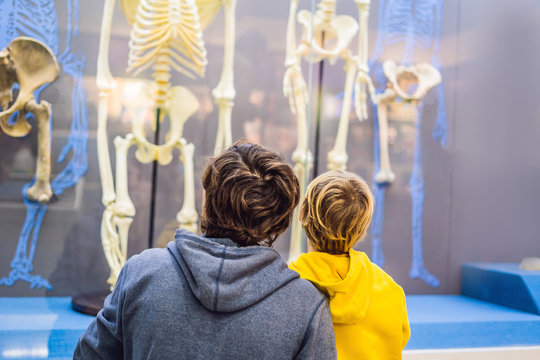 Dad and son are watching the skeletons of ancient and modern people. Human evolution is the evolutionary process that led to the emergence of anatomically modern humans