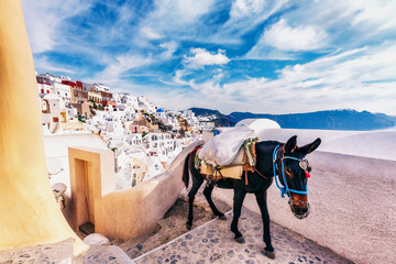 Church and donkey in Oia, Santorini island in Greece, on a sunny day.