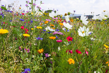 bright colorful flowers in meadow at sunshine summer day