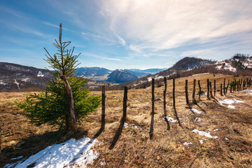 small spruce tree by the fence on top of a hill. lovely mountainous countryside in springtime. leafless trees and spots of snow on a weathered meadow. gorgeous blue sky with some cirrus clouds