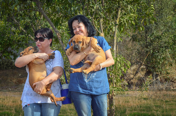 Boerboel Mastiff puppies are bored in hands of two mature women